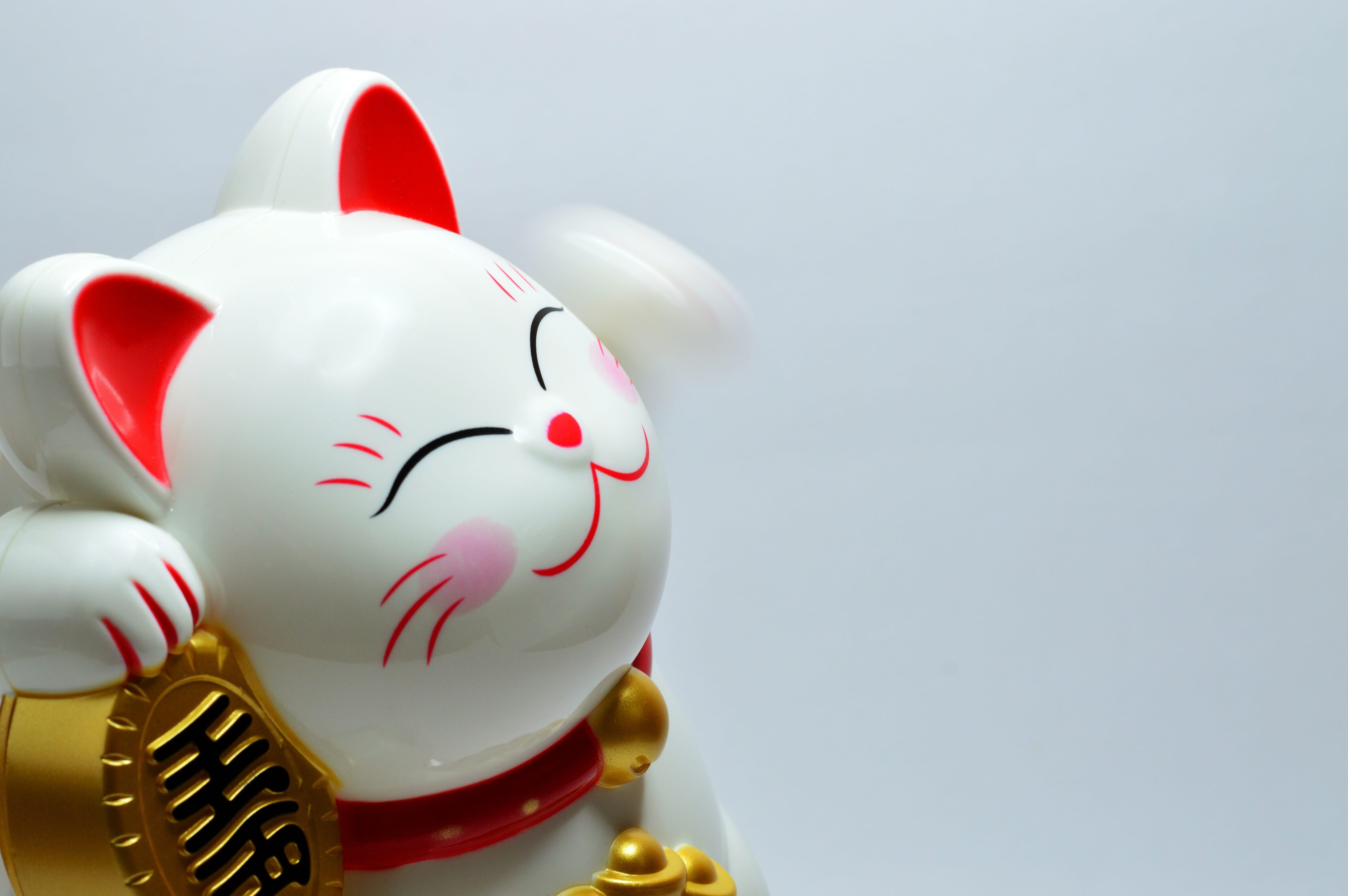 Gatto Bianco Hachiko